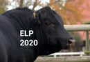 Eigenleistungsprüfung 2020